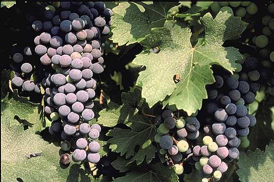North Georgia Wine Country