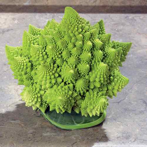 Park Seed Co.'s Romanesco Veronica variety