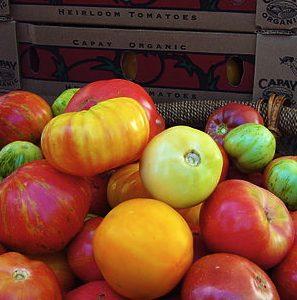 Slowfood_tomatoes-001