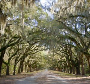 Wormsloe Historic Site, Savannah, Georgia