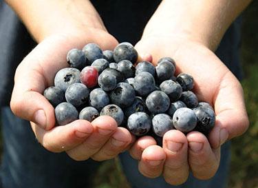 Byne Blueberry Farms