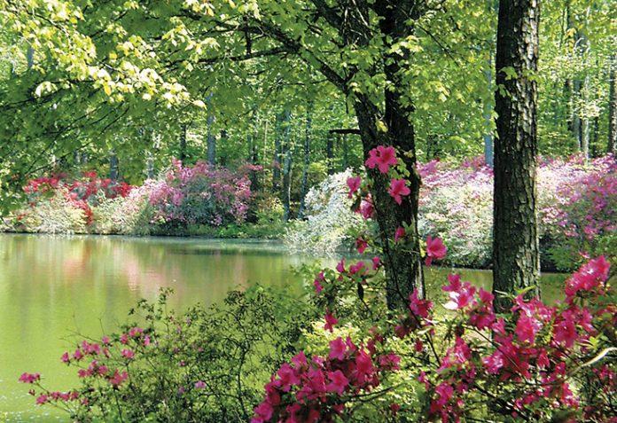 Azalea season at Callaway Gardens - Atlanta Magazine