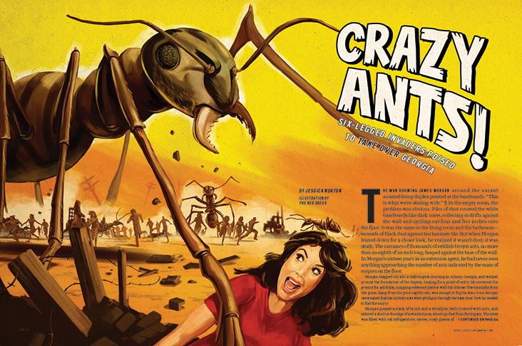 Crazy Ants!
