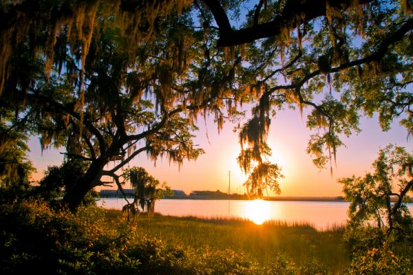 Set among the shimmering Marshes of Glynn, immortalized by poet Sidney Lanier, St. Simons Island enchants with ancient, moss-laden live oaks and extensive bike paths through maritime forests and along the sandy ocean shore.