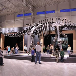 An apatosaurus greets visitors at the Tellus Science Museum.
