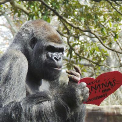 Photograph courtesy Zoo Atlanta