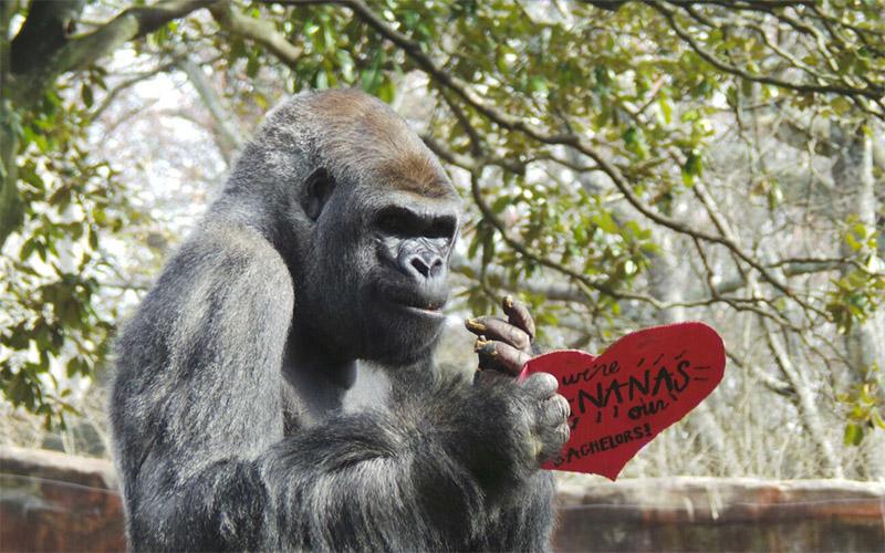 22 Atlanta Valentineu0027s Day Events To Celebrate Romance   Atlanta Magazine