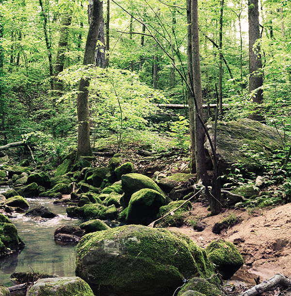 Find A Moment Of Zen At These 5 Atlanta Nature Preserves