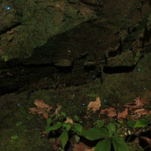 Fireflies at Anna Ruby Falls