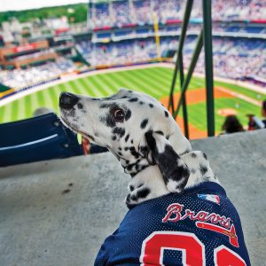 Atlanta Braves Bark in the Park
