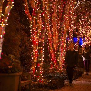 Garden Lights, Holiday Nights, courtesy of the Atlanta Botanical Garden