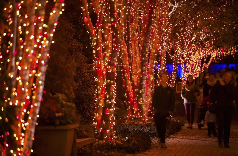 Callaway Gardens Christmas Lights.Callaway Gardens Christmas Lights Garden Lights Atlanta