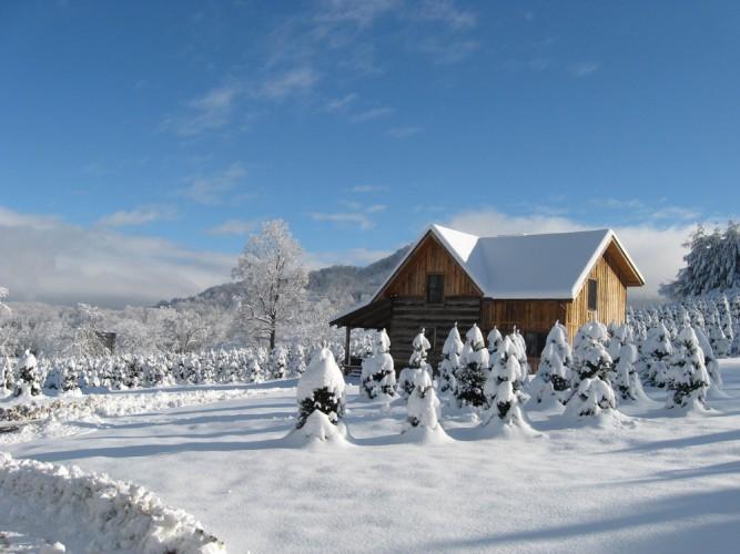 Boyd Mountains Christmas Tree Farm and Log Cabins