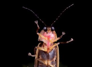 Creatures of Light: Nature's Bioluminesence