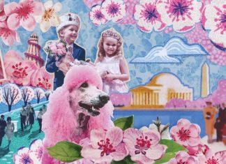 International Cherry Blossom Festival, National Cherry Blossom Festival