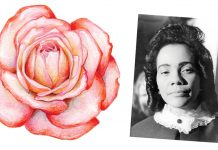 Coretta Scott King rose