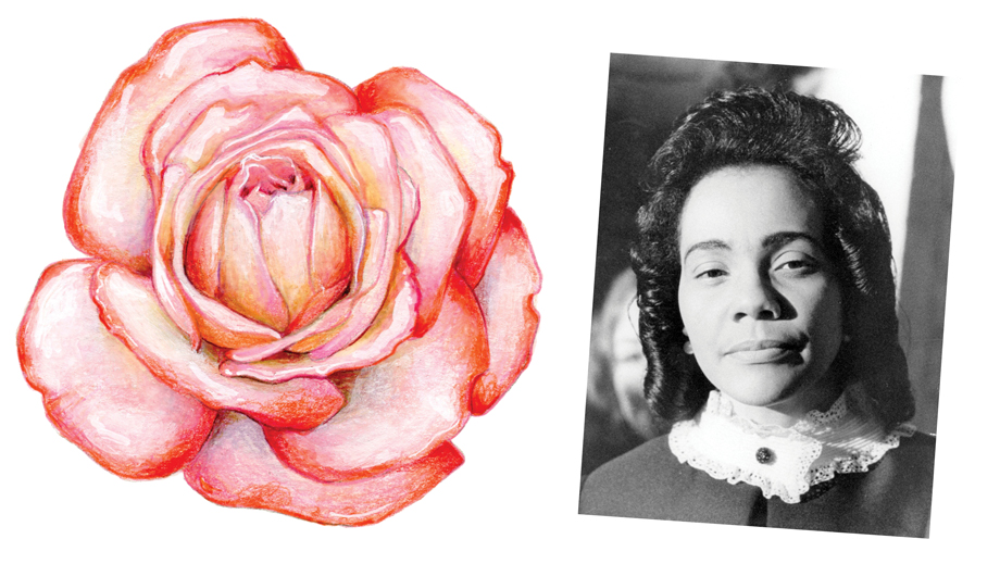 Coretta Scott King rose