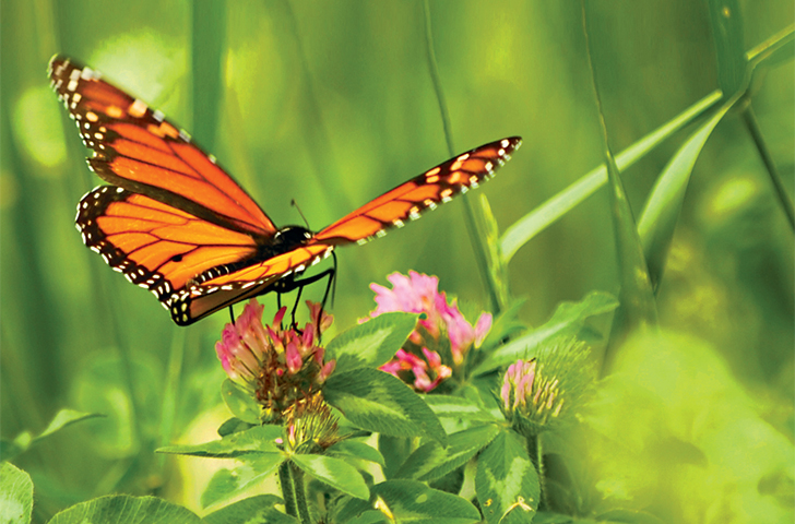 How to attract butterflies to your yard - Atlanta Magazine