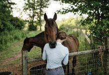 Wild horse training