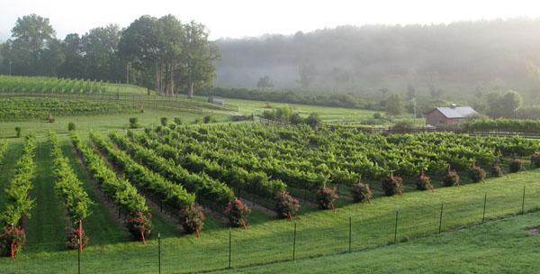 Stonewall Creek Vineyeards-600