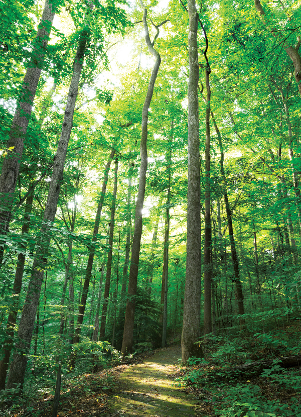 Essay about saving the forests
