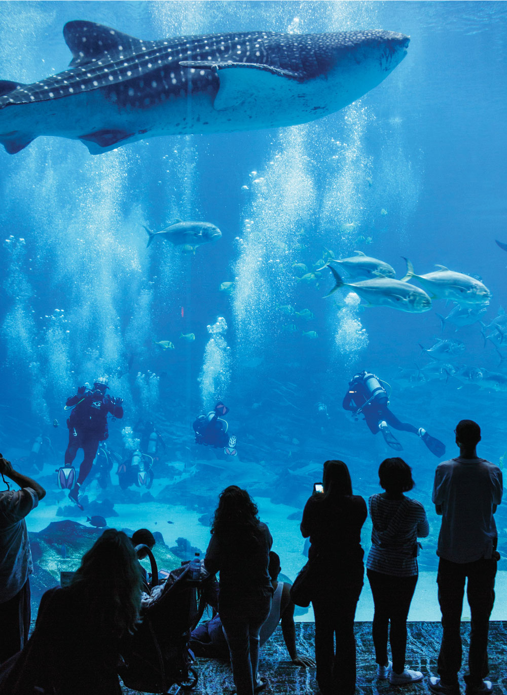 Veterans with ptsd find relief swimming with whale sharks for Site aquarium