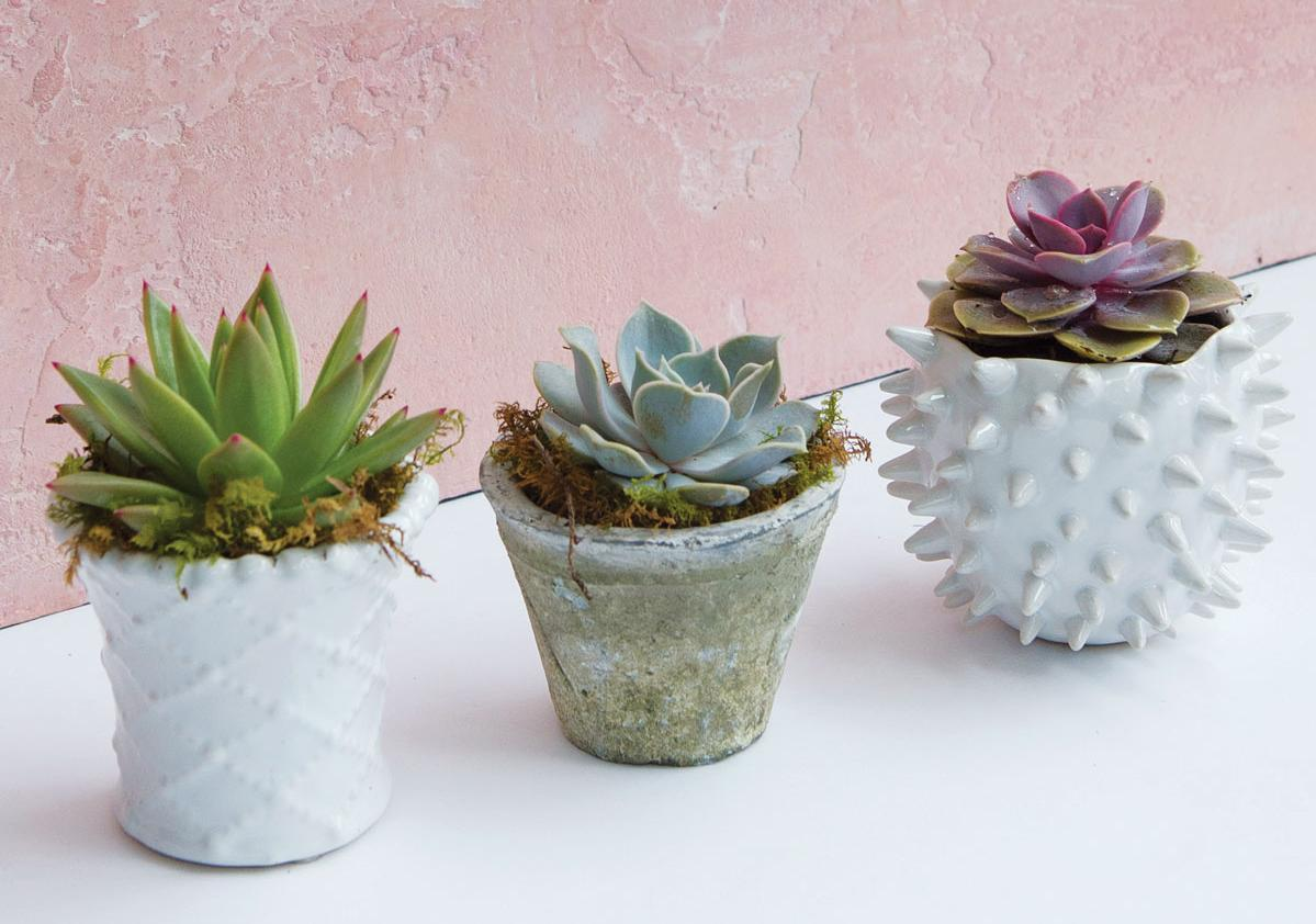 Good Desk Plants Get Succulent Savvy With These Expert Tricks Atlanta