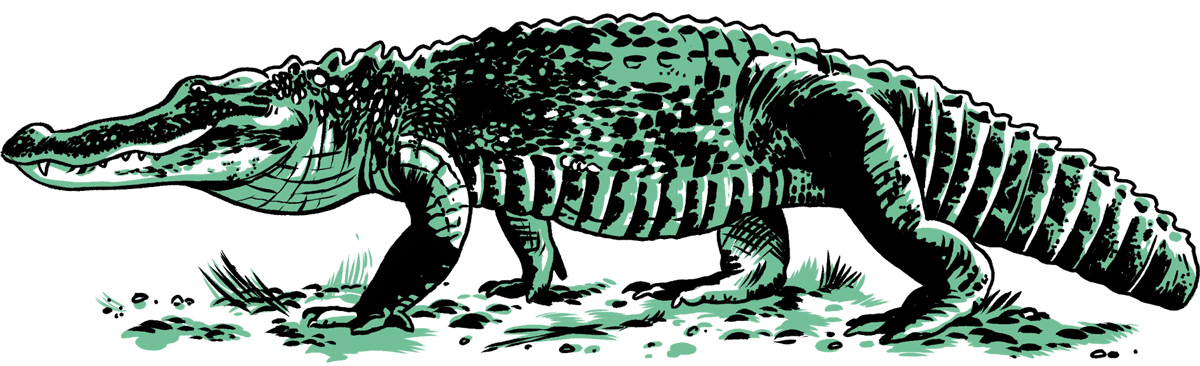 Chattahoochee Alligator
