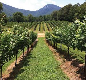 Yonah Mountain Vineyards, Cleveland, Georgia