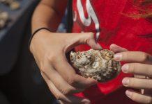 Landlocked Oyster Fest
