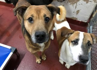 LifeLine Animal Project Fulton County hoarding dogs adpotion