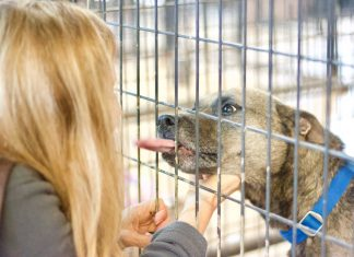 Atlanta animal shelters