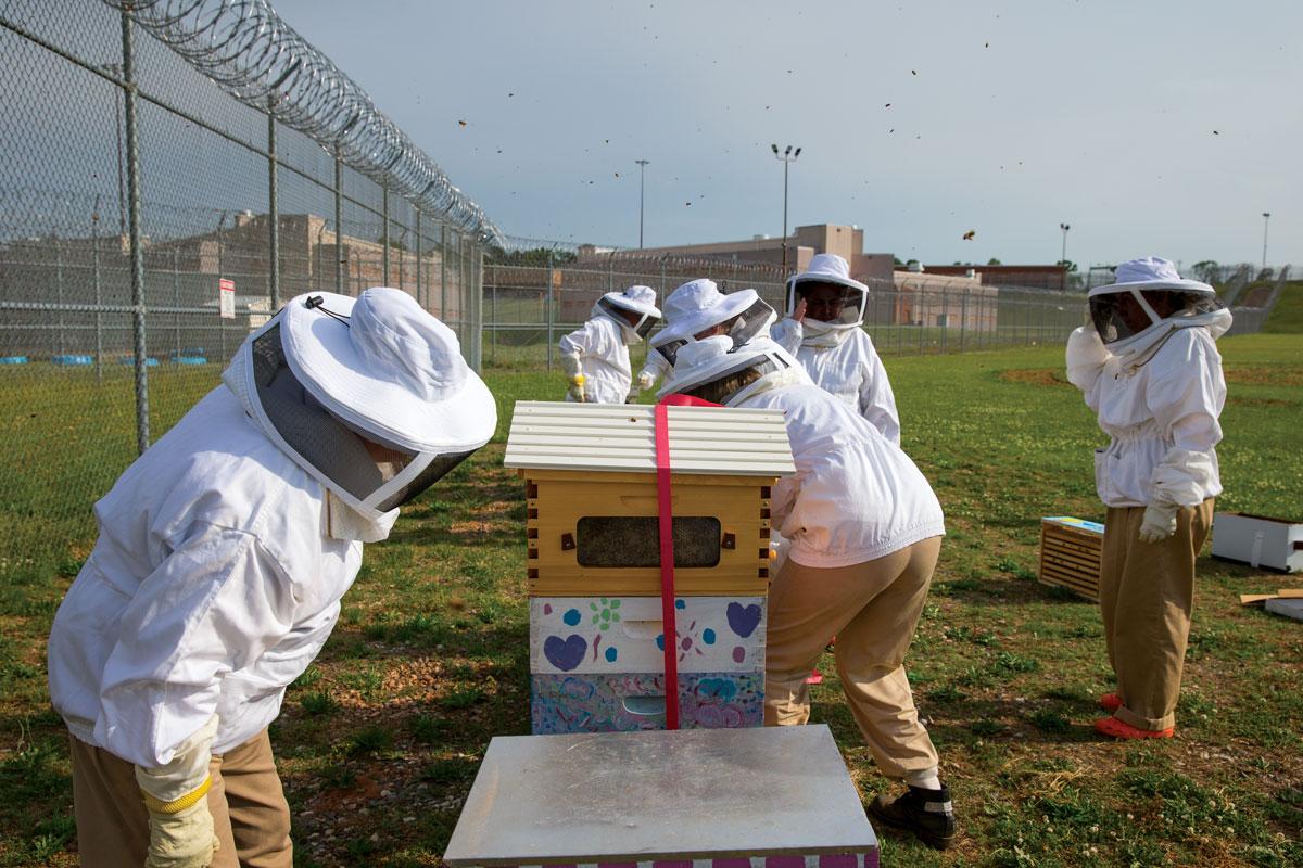 Beekeeping at Arrendale State Prison