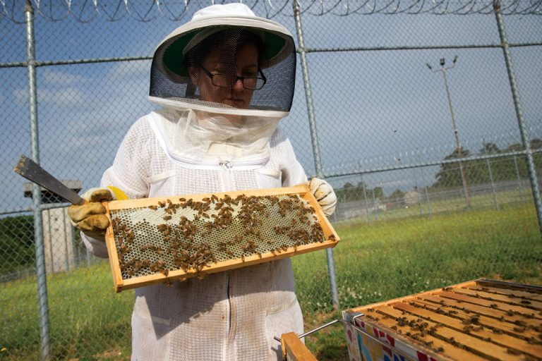At Georgia's Arrendale State Prison, women inmates forge a bond by keeping bees