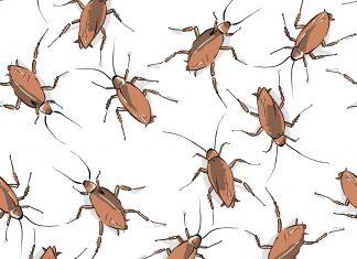 Why does Atlanta have so many roaches?
