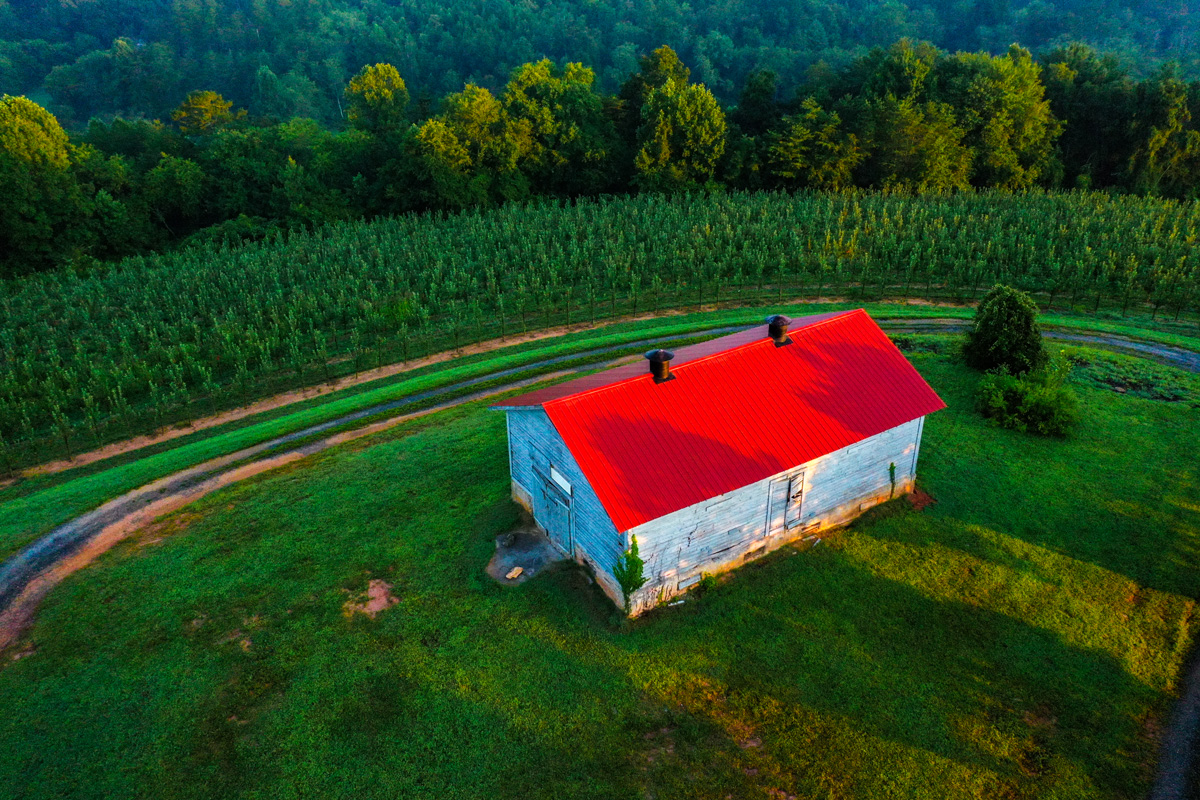 Where to find apple orchards and pumpkin patches near Atlanta