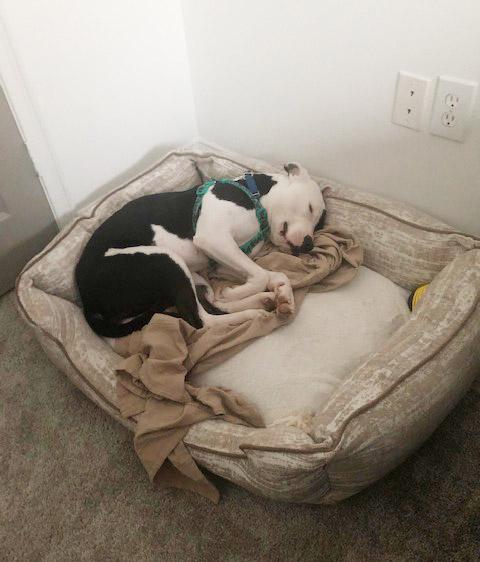 Animal adoptions up in Atlanta