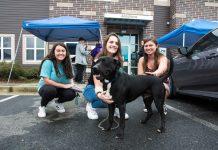 LifeLine Animal Project foster