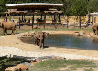 Visiting Zoo Atlanta in the pandemic