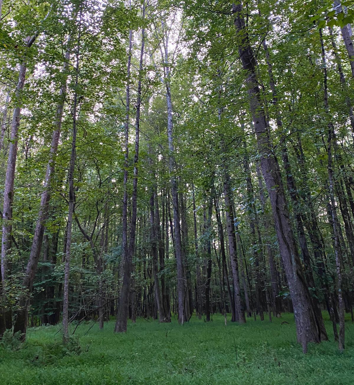 Lionel Hampton–Beecher Hills Nature Preserve