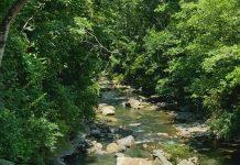 Proctor Creek Greenway
