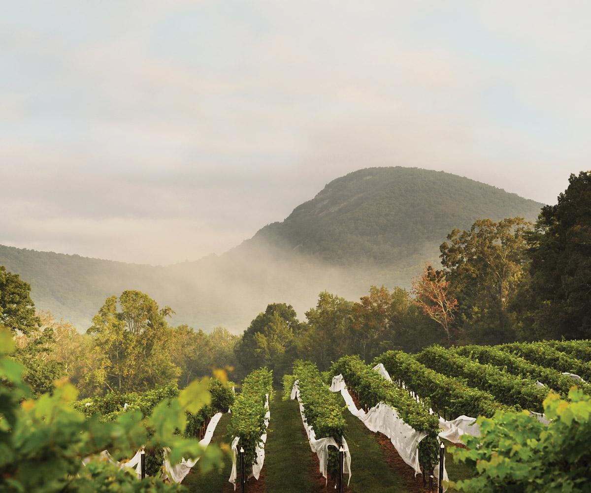 Wineries in Georgia