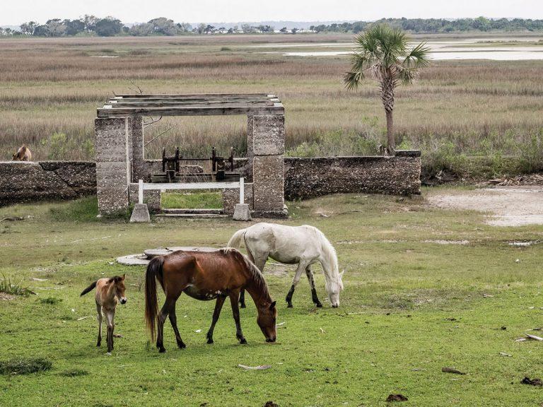 A road trip along Georgia's coast invites travelers to take a walk on the wild side
