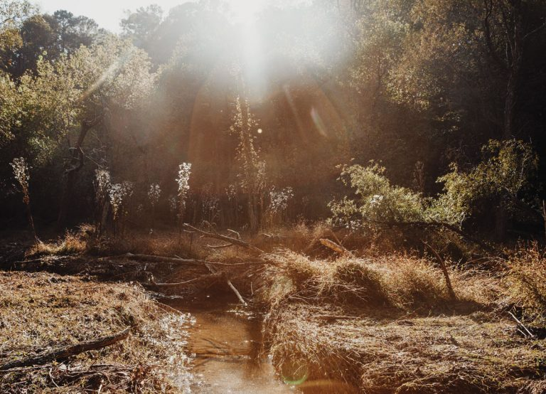 One of Atlanta's largest remaining forests has been saved. Now what?